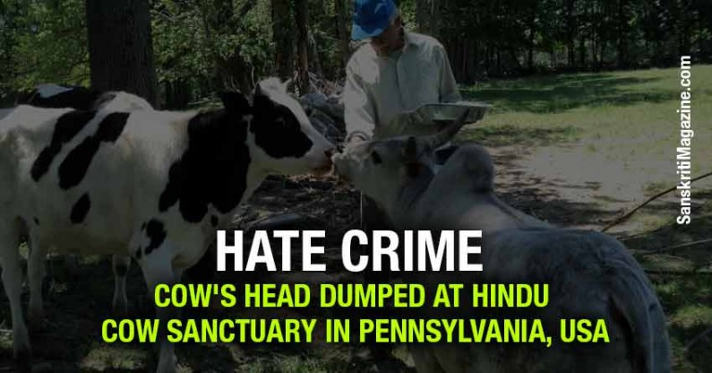 Hate Crime : Cow's head dumped at Hindu cow Sanctuary in Pennsylvania, USA