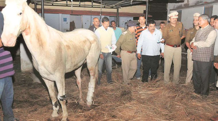 Uttarakhand CM Harish Rawat checks on the horse's condition, Tuesday.