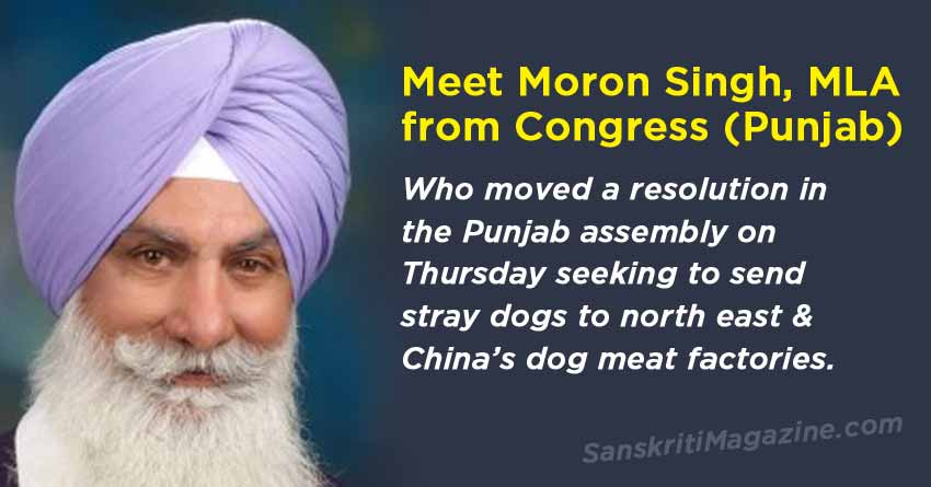 Send stray dogs to north east, China