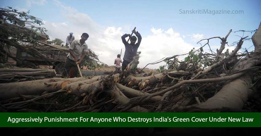 Aggressively-Punish-Anyone-Who-Destroys-India's-Green-Cover-With-New-Law