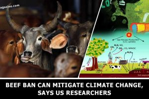 Beef-ban-can-mitigate-climate-change-US-researchers