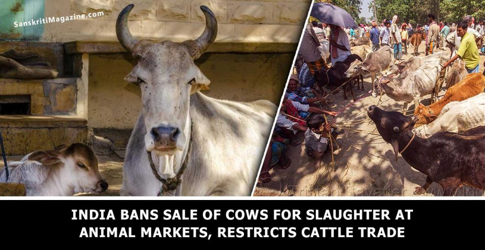 India-bans-sale-of-cows-for-slaughter-at-animal-markets,-restricts-cattle-trade