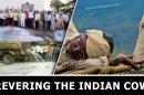 Revering-the-Indian-Cow