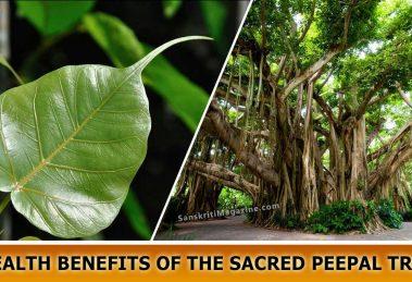Health Benefits of the sacred Peepal Tree