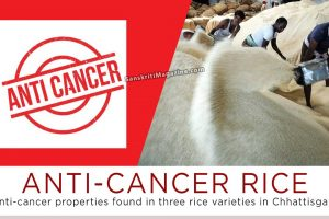 Anti-cancer properties found in three rice varieties in Chhattisgarh