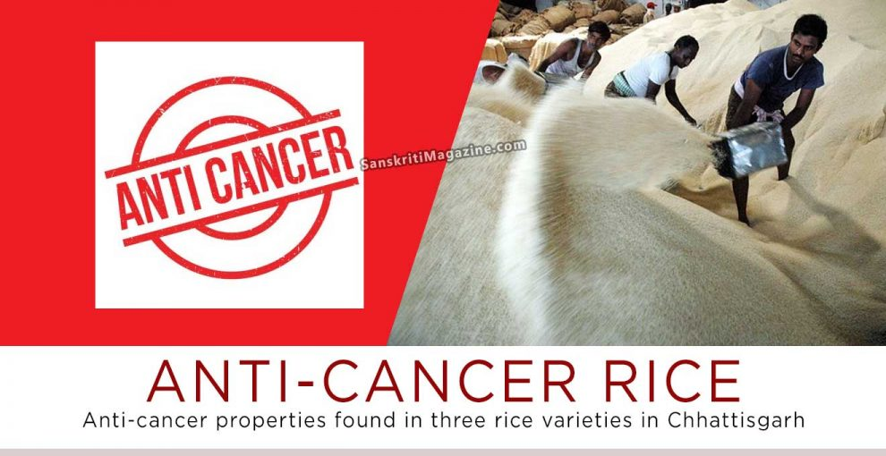 Anti-cancer properties found in three rice varieties in Chhattisgarh